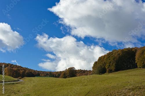 bosco del cansiglio 427 © peggy