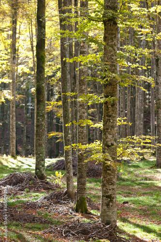 bosco del cansiglio 430 © peggy