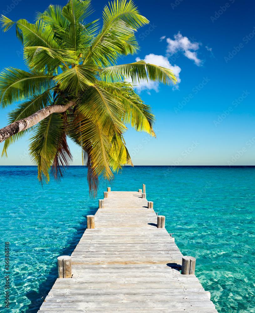 Fototapeta plage vacances cocotier