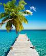 Leinwandbild Motiv plage vacances cocotier