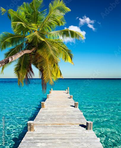 plage vacances cocotier - fototapety na wymiar