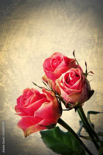 dzikie-roze-pocztowka-vintage