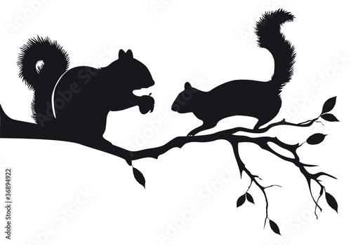 Photo  squirrels on tree branch, vector