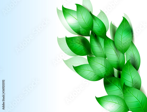 green leaves. vector illustration