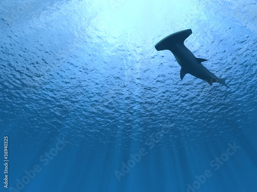 Obraz Hammerhead shark under water - fototapety do salonu