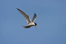 Tern Tw0087