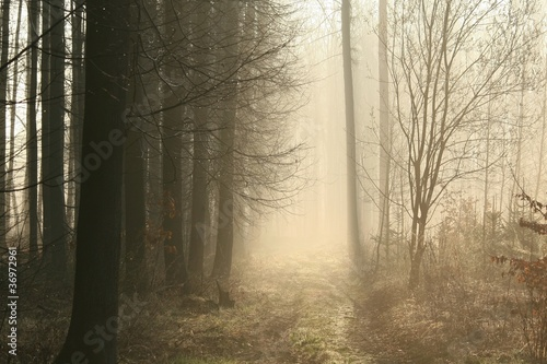 Foto auf Acrylglas Wald im Nebel Dirt road leading through the early spring forest