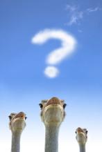 Ostrich Watching Question Mark Cloud