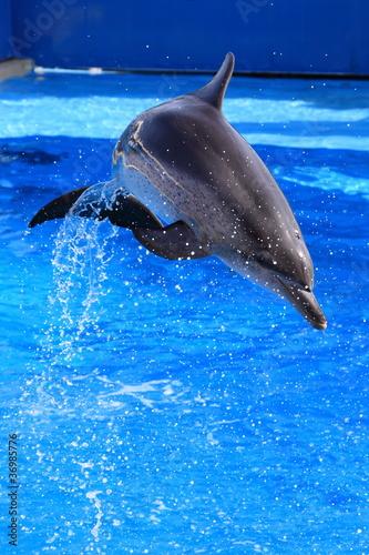 Staande foto Dolfijnen little dolphin jumping out of water
