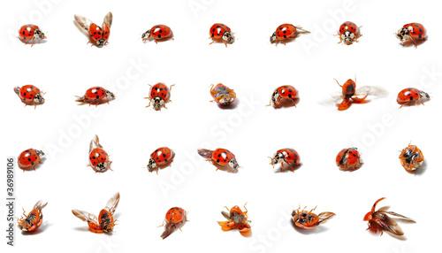 viele Marienkäfer