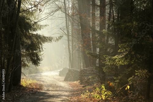 Papiers peints Foret brouillard Country Road in the misty late autumn woods at dawn