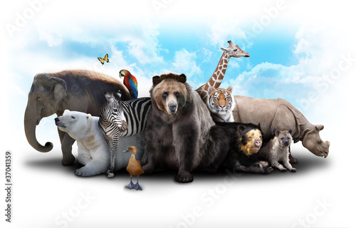 Zoo Animal Friends Wallpaper Mural