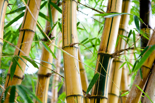 Montage in der Fensternische Bambus bamboo forest