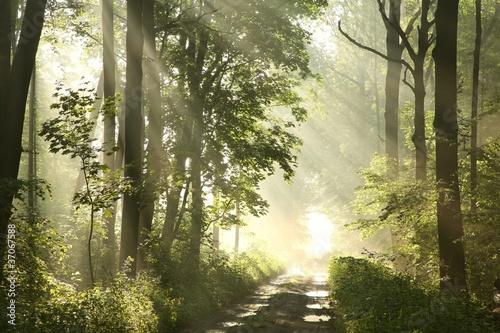 lasowy-slad-na-mglowym-wiosna-ranku-po-deszczu
