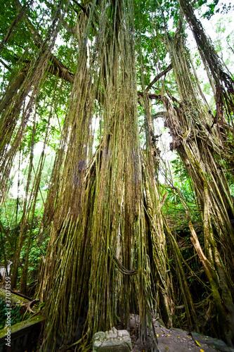 Naklejki dżungla  wyspa-tysiaca-swiatyn
