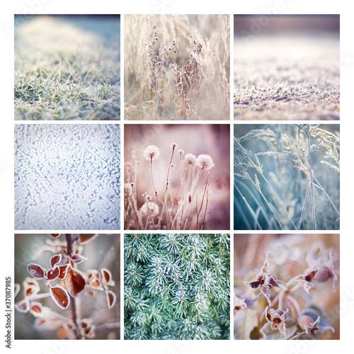 oszronione kwiaty trawy owoce róży idealne na święta - 37087985
