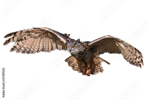 Staande foto Uil Flying Owl