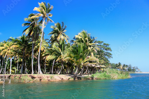 Green palm forest, beautiful  landscape in Baracoa Canvas Print