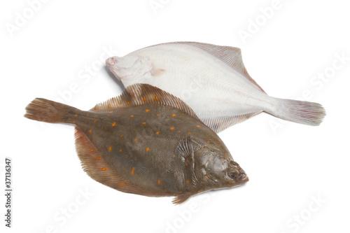 Fresh raw plaice fishes Fototapet