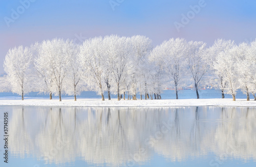 Fototapety, obrazy: winter trees covered with frost