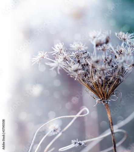 granica-piekne-kwiaty-kwiatowy-wzor