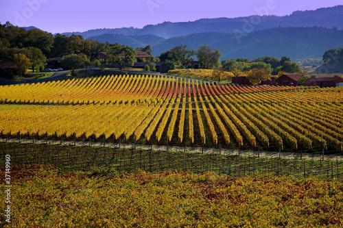 Fotografie, Obraz  Napa Valley in the fall