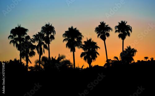 Valokuva  Tropical palm trees