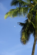 Palm tree detail with moon