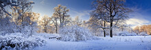 Winter Panorama Of A Park At S...