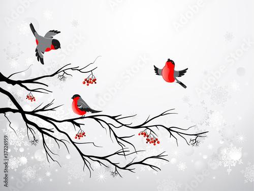 Photo  Branch and birds bullfinch
