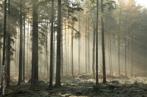 Foto auf Gartenposter Wald Picturesque autumnal forest on a foggy November morning