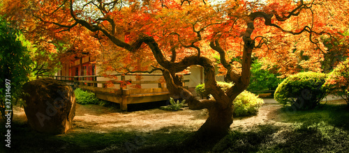 Tree in an Asian Garden - 37314697