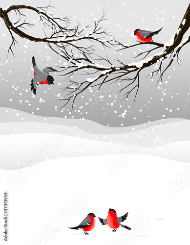Canvastavla Winter background with birds bullfinch