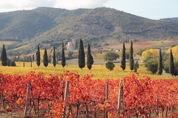 Fototapetafantastic landscape of tuscan vineyards in autumn