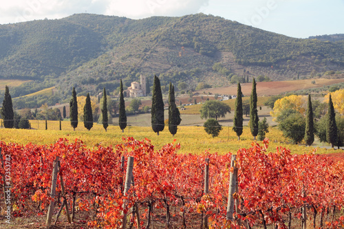 fantastic landscape of tuscan vineyards in autumn - 37353782
