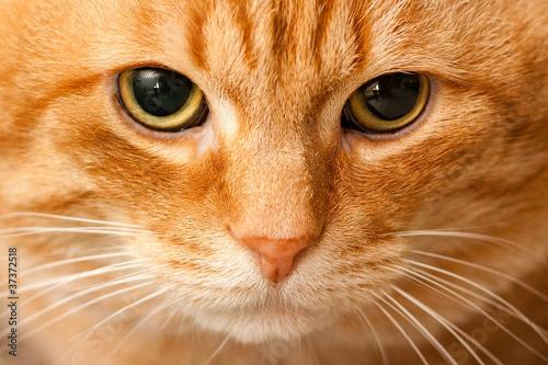 Fotomural  Cat portrait
