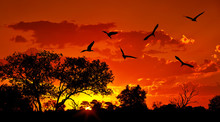 Landscape Of Africa With Warm Sunset