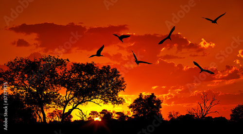 La pose en embrasure Rouge traffic Landscape of Africa with warm sunset