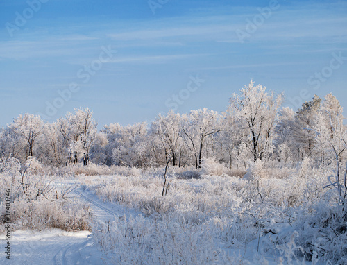 Fototapeta zima zimowy-las-drzewa-pokryte-szronem