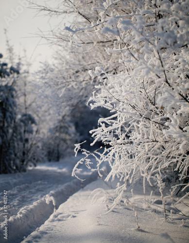 Fototapeta zima zimowa-droga-w-lasie