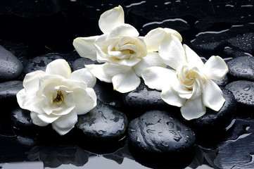 Fototapeta Egzotyczne Wet Zen Spa Stones with gardenia flower