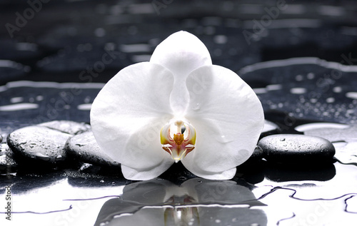 zen or spa still life on black with white orchid
