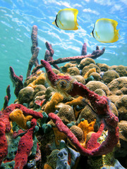 Colorful sea sponges and tropical fish in a coral reef with water surface in background, Caribbean sea