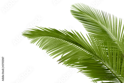 Canvas Prints Palm tree Leaves of palm tree