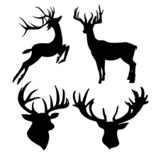Deer Silhouette Isolated On Wh...