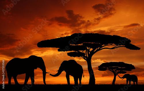 Obrazy na płótnie Canvas Silhouette elephants in the sunset