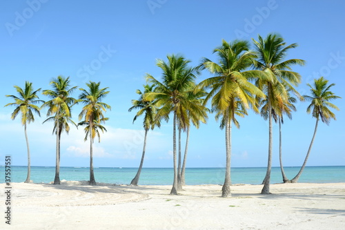 Foto auf Gartenposter Strand palmenstrand
