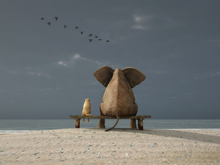 Fototapeta elephant and dog sit on a beach