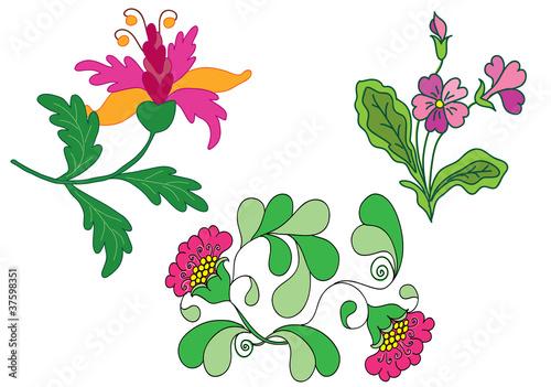 Fényképezés  Flowers