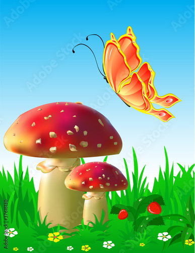 Cadres-photo bureau Monde magique Summer landscape with mushrooms and a butterfly